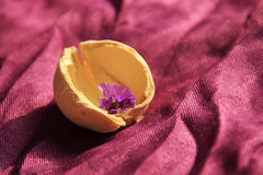 Little flower in the shell illuminated by the sunlight on purple Stock Photo