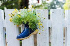 Little flower in the shoe decorate Stock Photos