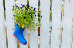 Little flower in the shoe decorate Stock Image