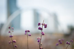 Little flower. At Song-do new city in Korea Stock Photo
