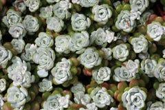 Little flower-stones 2. A carpet made of little flower-stones Stock Image
