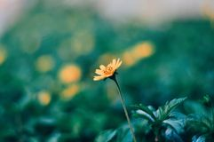 Little Flower Stock Image
