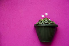 Vase on a violet wall Royalty Free Stock Photography