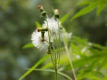 Little flower stock photography