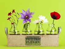 Free Little Flowers Royalty Free Stock Photos - 60474968