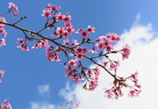 Little flowers with branch. Pink flowers on branch of the tree before the beautiful sky Stock Image