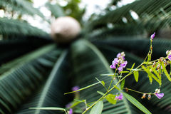 Little Flowers. Pretty purple flowers in front of an artfully blurred palm tree Stock Images