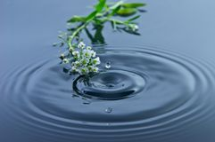 Little Flowers - Water Droplet Stock Photography