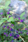 Little Flowers. Wild flowers on a summer day. Selective focus Royalty Free Stock Photos