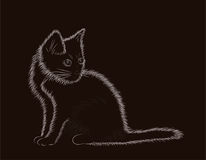 Little fluffy cat black and white Royalty Free Stock Image