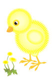 Little fluffy chick Royalty Free Stock Photos