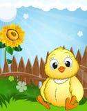 Little fluffy chicken Stock Image