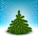 Little fluffy Christmas tree Stock Photos