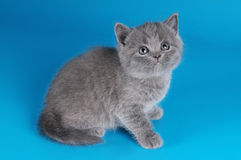 Little fluffy kitten Royalty Free Stock Photo