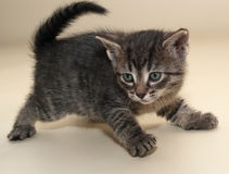 Little fluffy kitten backs on yellow Royalty Free Stock Photo