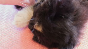Little fluffy kitten. stock footage