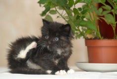 Little fluffy kitten and a flower Stock Photos