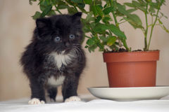 Little fluffy kitten and a flower Stock Photo