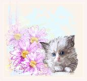 Little fluffy kitten and gerberas Stock Photos