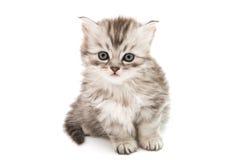 Little fluffy kitten isolated Stock Photo