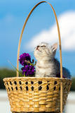 Little fluffy kitten sitting in a basket Stock Photos