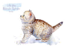 Little fluffy kitten.  Spotted cat. Watercolor illustration of a  kitten Stock Images