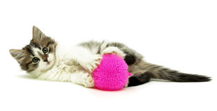 Little fluffy kitten with toy lying on a white background Royalty Free Stock Photos