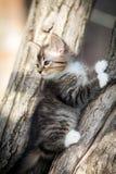 Little fluffy kitten on the tree Stock Photos