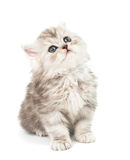 Little fluffy kitten Royalty Free Stock Photos