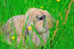 Little fluffy rabbit Stock Photo