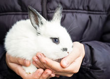 Little fluffy white bunny Royalty Free Stock Photography
