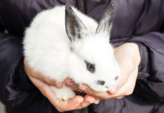Little fluffy white bunny Royalty Free Stock Images
