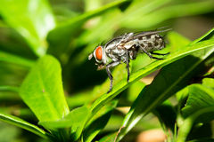 The little fly. Royalty Free Stock Image