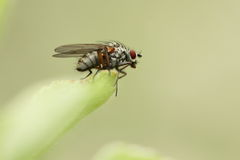 Little fly Stock Images