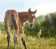 Little foal Stock Images