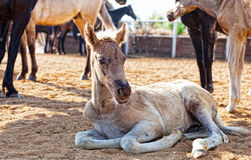 Little foal Stock Photo