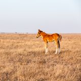Little foal standing on the pasture