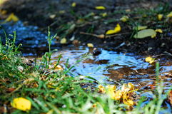 Little forest creek Stock Photography