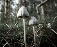 Little forest mushrooms. A shoot from some unknow mushrooms Stock Images