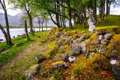 Little forest near Kilchurn Castle royalty free stock images