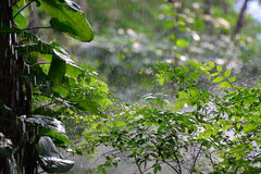 Little forrest in raining Stock Image