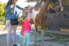 Little girl brushing a horse with her mother next to stables stock images