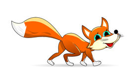 Little fox Royalty Free Stock Photography