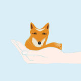 Little fox cupped in a hand Stock Photography