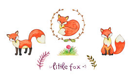 Little fox Royalty Free Stock Photos