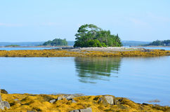 Little French Island in Maine Stock Image