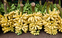 Little fresh banana in market for sale Royalty Free Stock Photography
