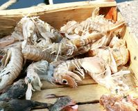 Little fresh shrimp in a wooden box Stock Image