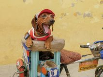 A little friend in havana stock image