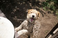 Little friendly joyful dog looking into the camera lens, outdoors royalty free stock image